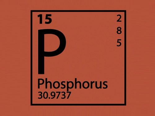 nutrition phosphorus
